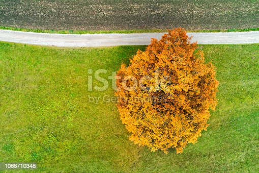 Aerial view of a single tree on a green field and country road in autumn, Bavaria, Germany.