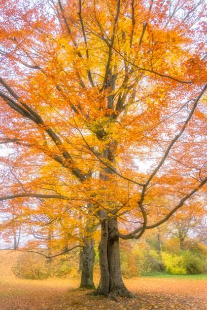 Baum Herbst und Blätter – Foto