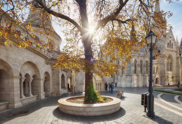 秋の木と古いブダペスト マーチャーシュ教会 - マーチャーシュ教会 ストックフォトと画像