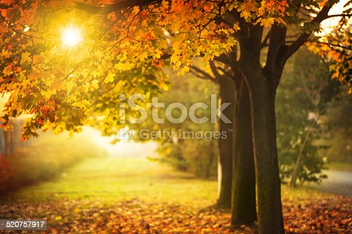 istock Autumn Tree and Sun during Sunset - Fall in Park 520757917