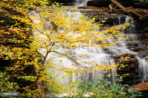 A tree with yellow Autumn leaves in front of a waterfall at Ricketts Glen State Park, PA.