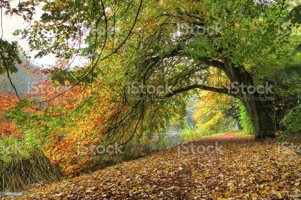 Autumn tree arch royalty-free stock photo
