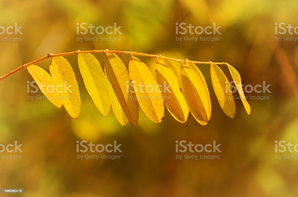 Autumn tree branch royalty-free stock photo
