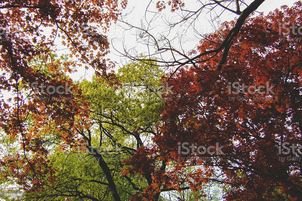 Autumn tree branches of red and green colors stock photo