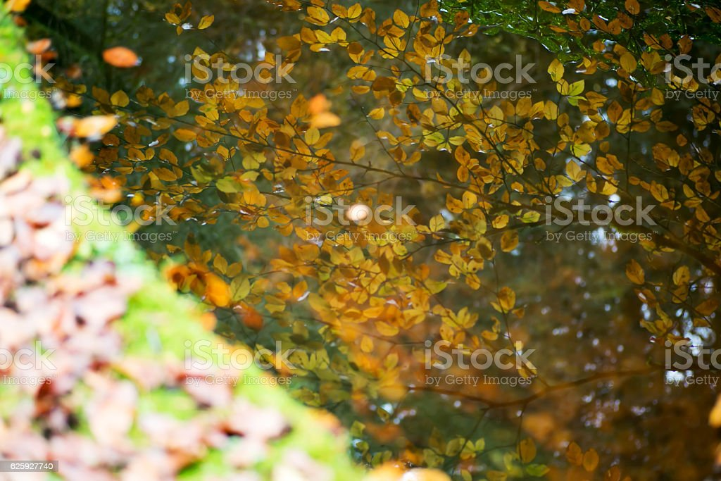autumn tree branches reflecting on water stock photo