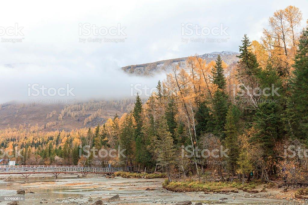 Autumn Tree Color at Kanas Lake, Xinjiang, China foto royalty-free