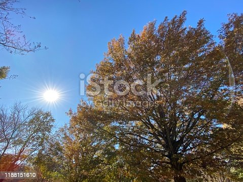 This quarter century old tree is fighting the wind underneath the bright sunlight over Maple Hill Cemetery in Huntsville, AL USA.