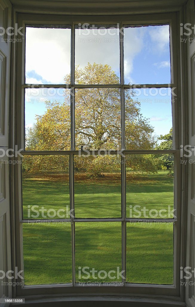 Autumn tree from window royalty-free stock photo