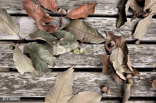 istock Autumn tree fruit - acorn and leaves 874165942