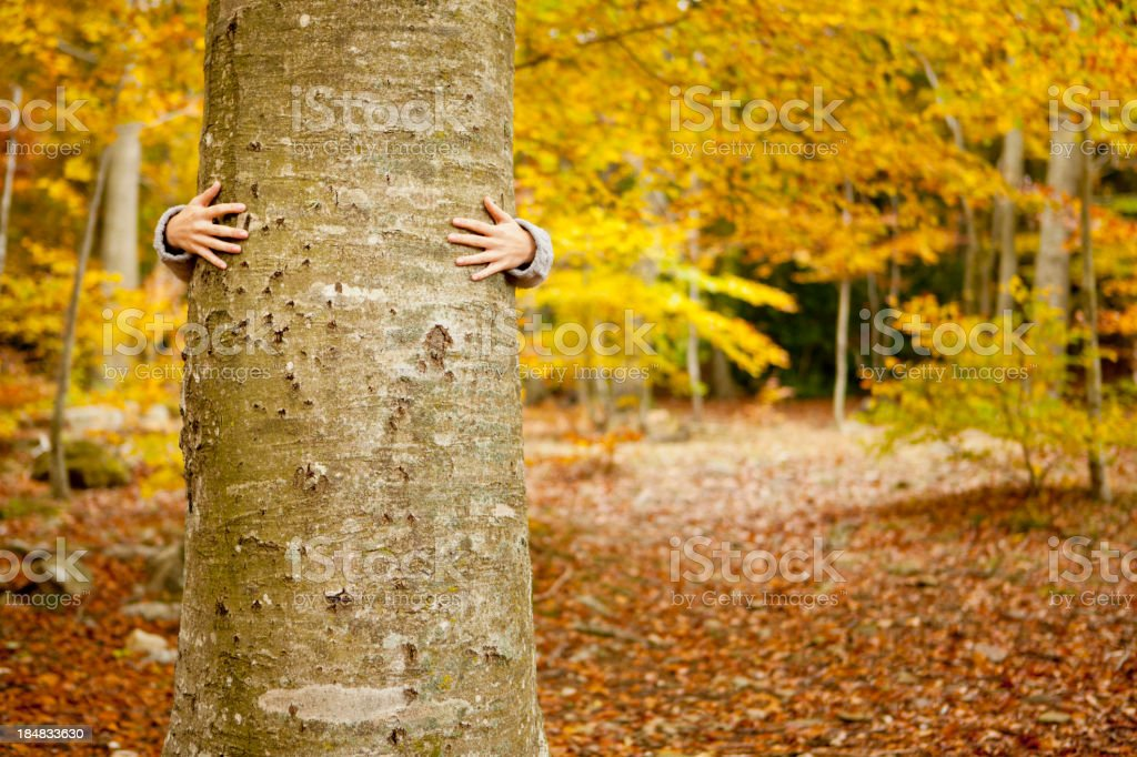 Autumn tree hugging stock photo