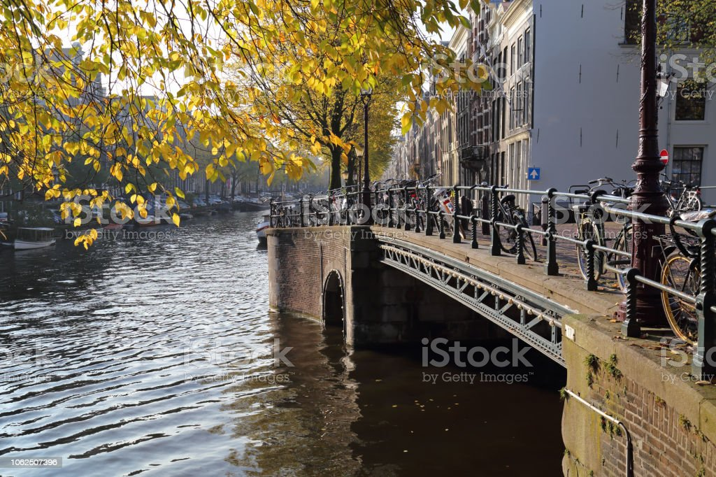 Autumn tree in Amsterdam, Holland stock photo