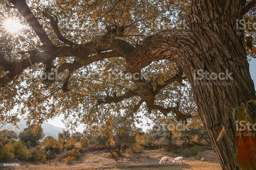Autumn Tree in sun light stock photo