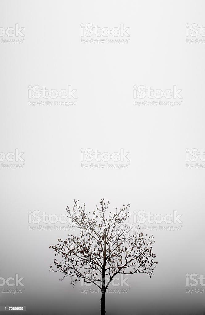 Herbst Baum im Nebel-Hintergrund – Foto