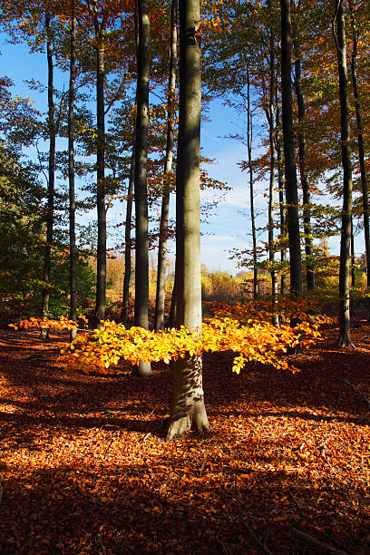 Autumn tree in the woods stock photo