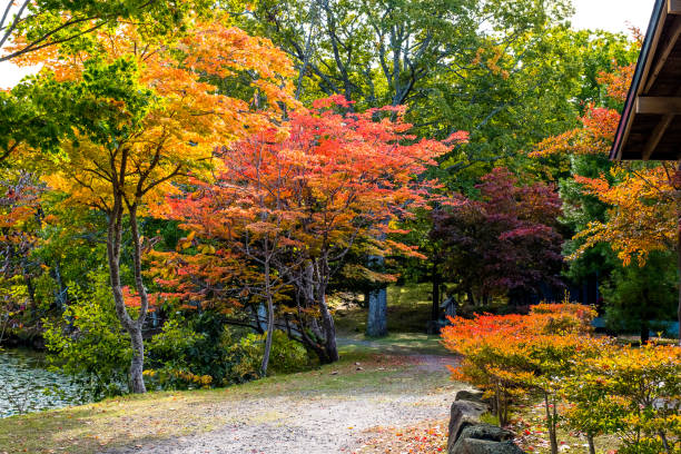 Autumn tree ,maple tree with colorful autumn leaves, red orange yellow green maple leaves with path in Onuma national park in autumn and Mount Komagatake (Komagatake volcanic) at Hakodate, Hokkaido, Japan stock photo