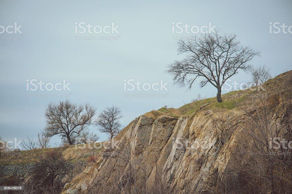 autumn tree on a cliff stock photo