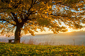 Tree on grassy field during autumn. Scenic view of fog covering landscape in background. View of beautiful nature.