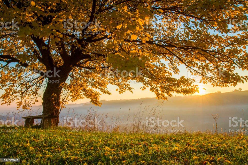 Autumn tree on field in foggy weather stock photo