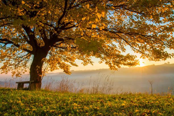 hösten träd på fältet i dimmigt väder - nature foggy calm bildbanksfoton och bilder