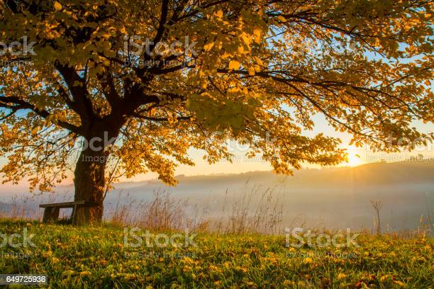 Photo of Autumn tree on field in foggy weather