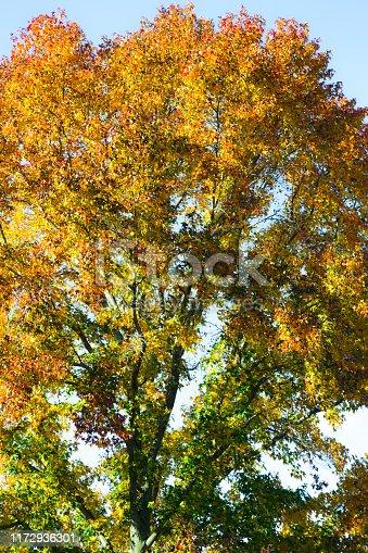 istock Autumn Tree 1172936301