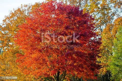 istock Autumn Tree 1176342359