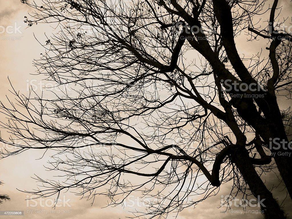 Árvore de outono - foto de acervo