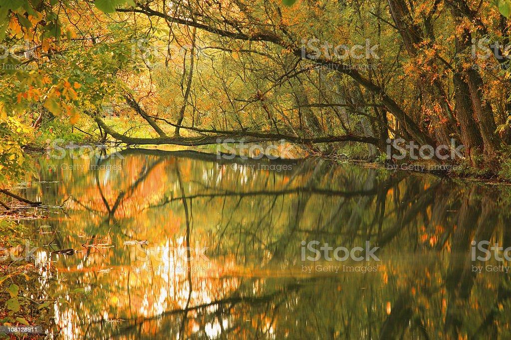 Autumn Tree Reflections on River Stream royalty-free stock photo