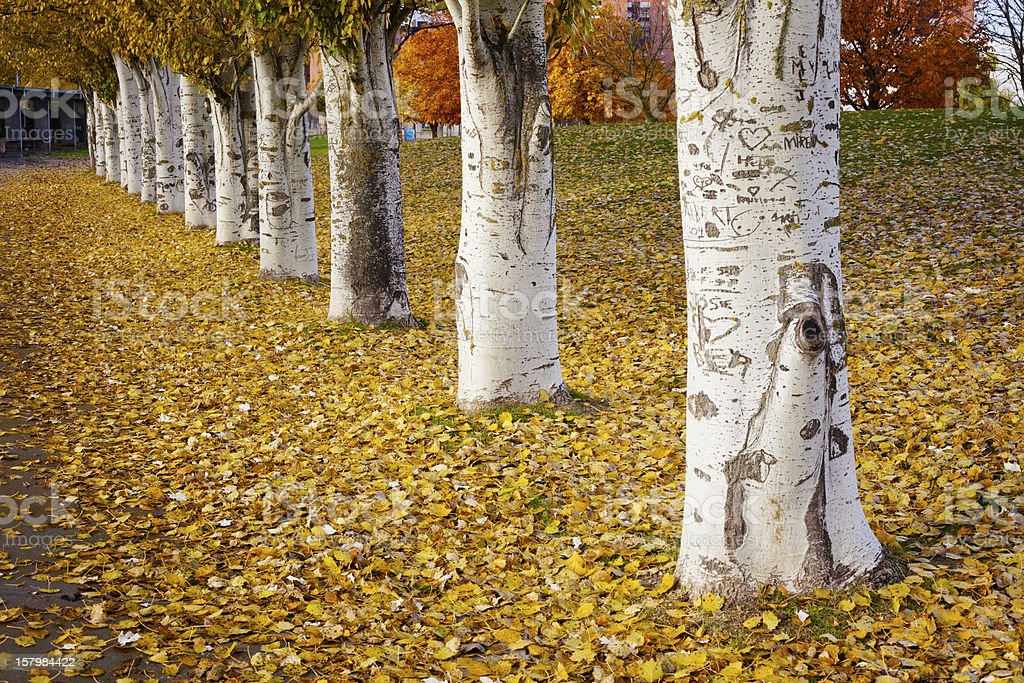 Autumn Tree Row royalty-free stock photo