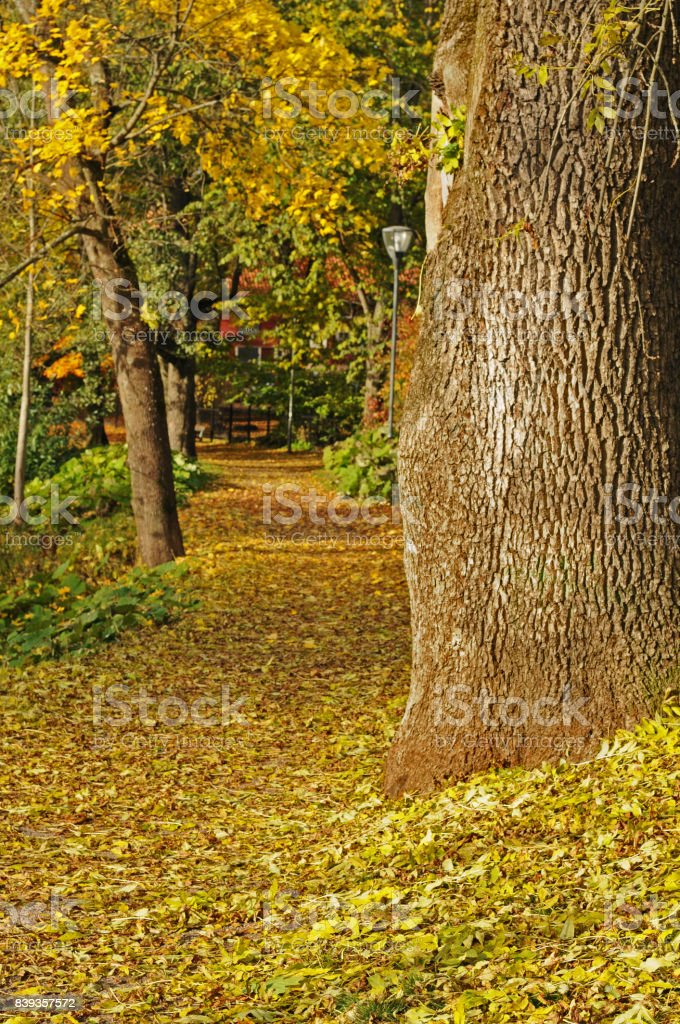 Autumn tree s and leafs Vasteras stock photo