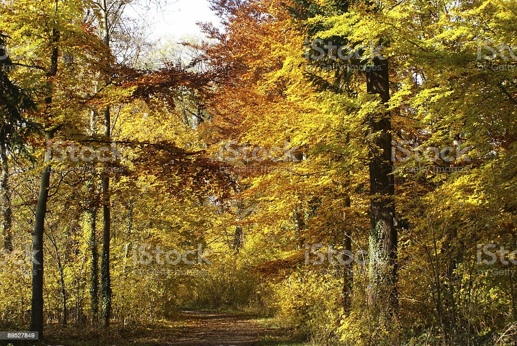 Autumn Tree Scene royalty-free stock photo