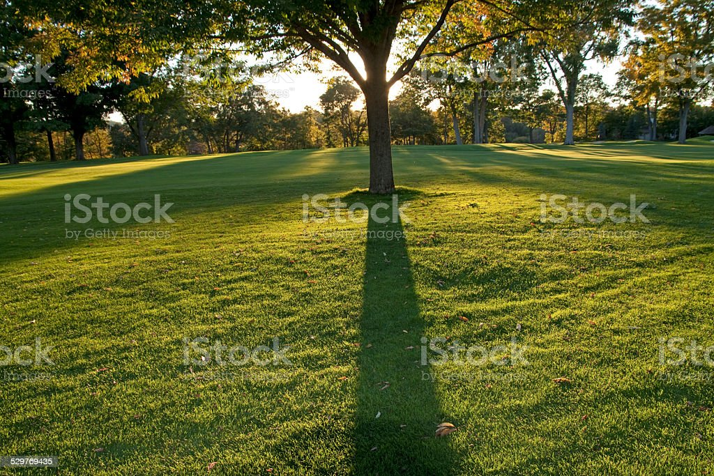 Autumn tree shadow stock photo