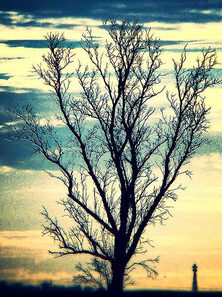 Silhueta de árvores de outono - foto de acervo