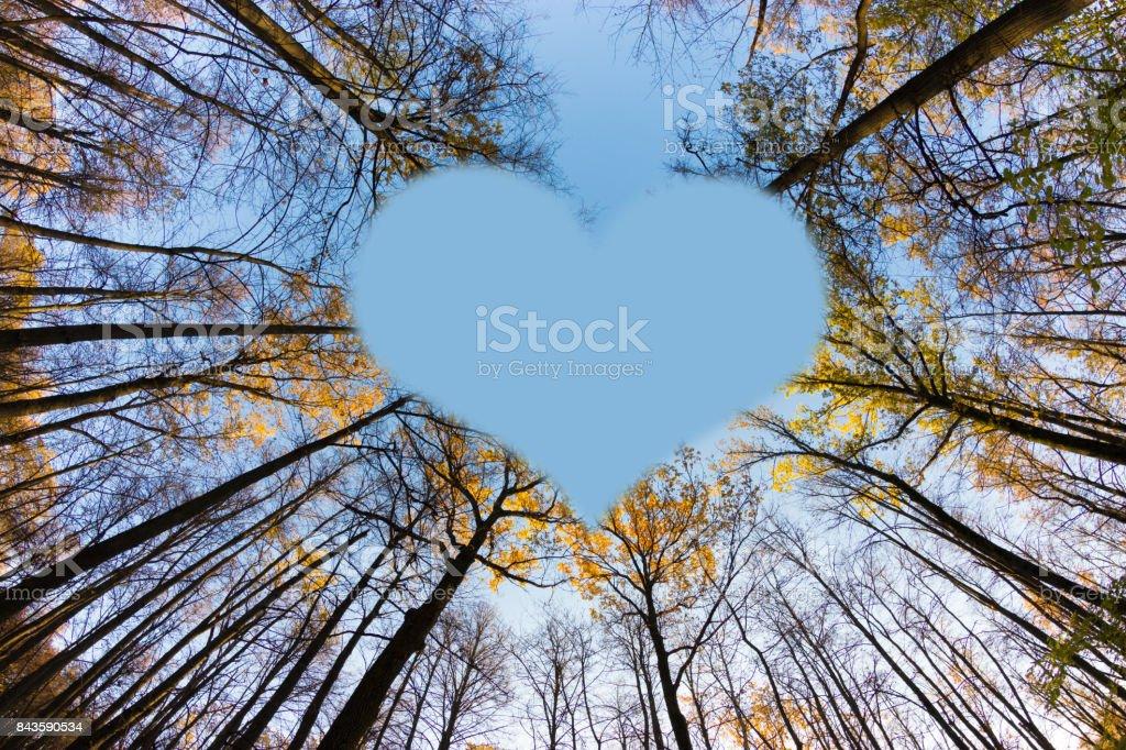 Herbst Baum-tops – Foto