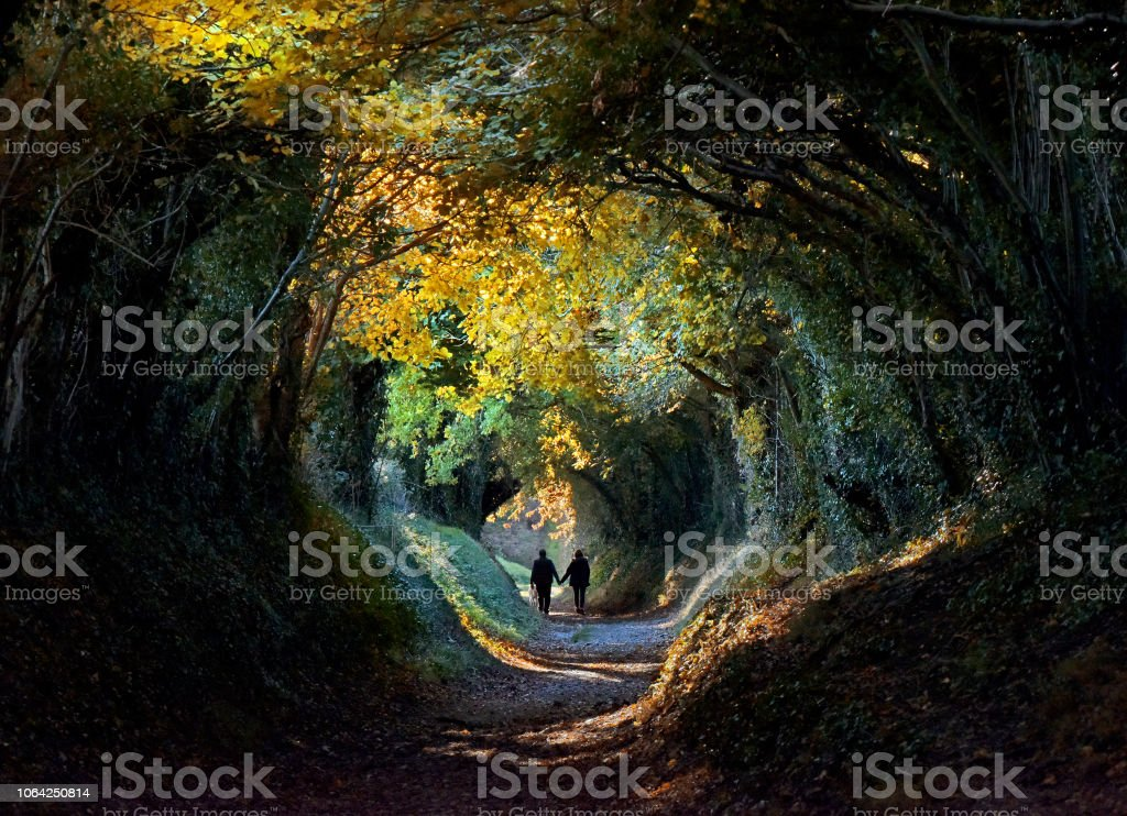 Autumn tree tunnel stock photo