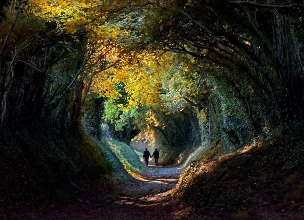 autumn tree tunnel - vanishing point stock pictures, royalty-free photos & images