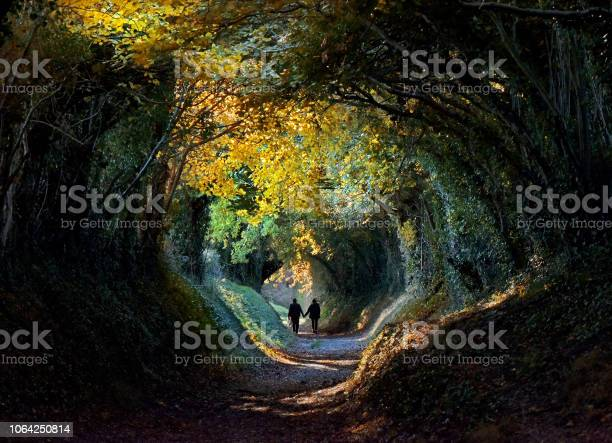 Photo of Autumn tree tunnel