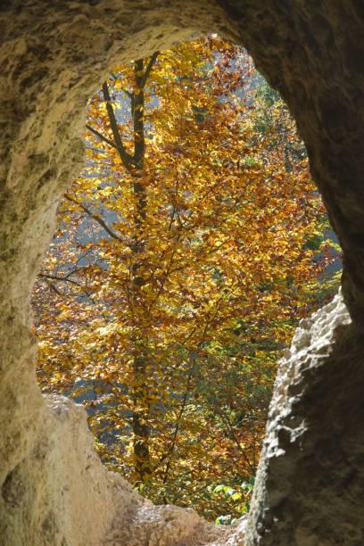 herbst baum mit gelben blättern durch das loch des diana grotto der ermitage arlesheim, schweiz - dornach stock-fotos und bilder