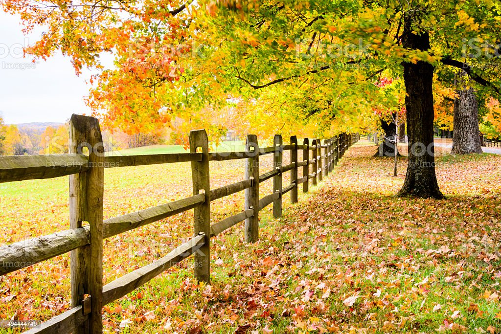 XXXL: Autumn trees along a fence. stock photo