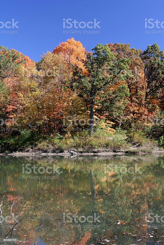 Autumn Trees and Pond royalty-free stock photo