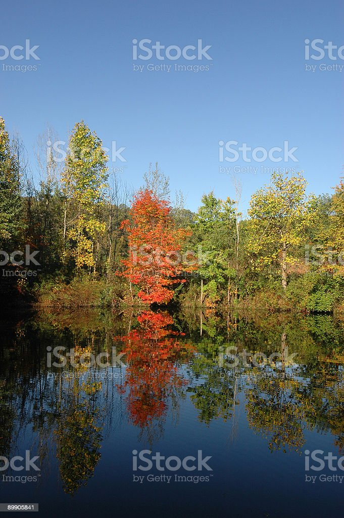 Autumn Trees and Reflection royalty-free stock photo