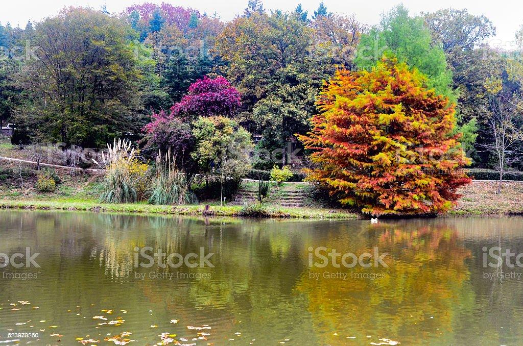 Autumn trees around lake. stock photo