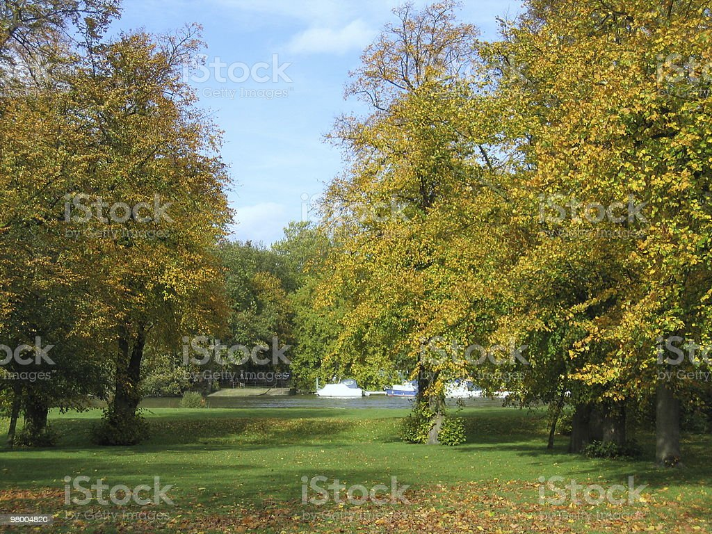 Autumn Trees at Ham House royalty free stockfoto