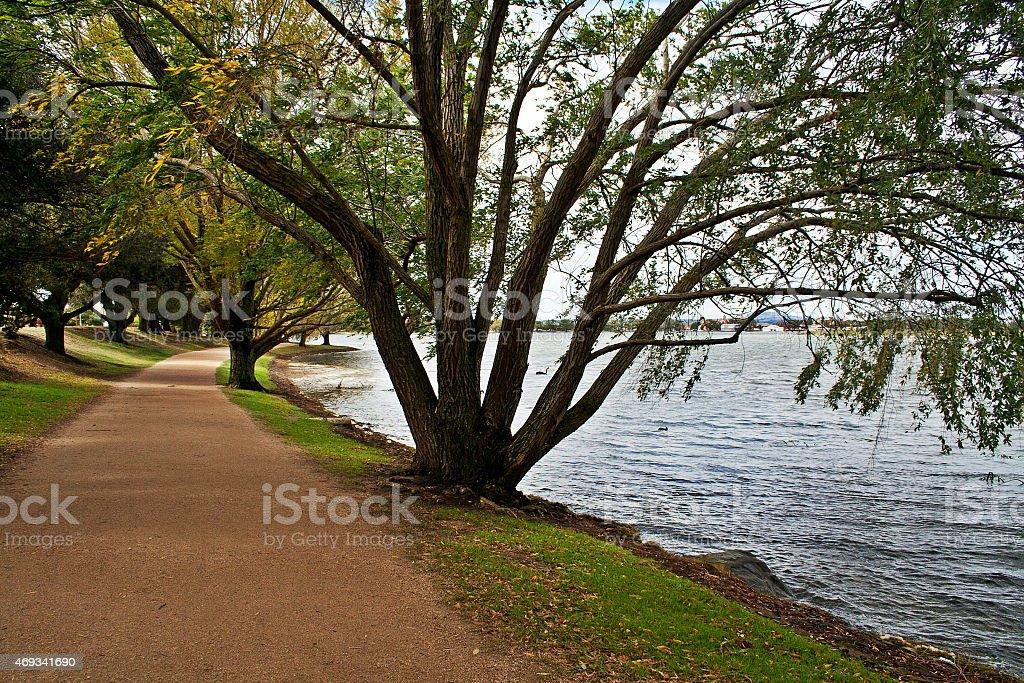 Autumn Trees at Lake Wendouree, Ballarat stock photo