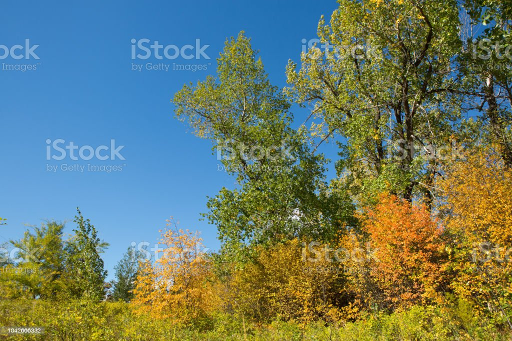 Autumn trees blue sky stock photo