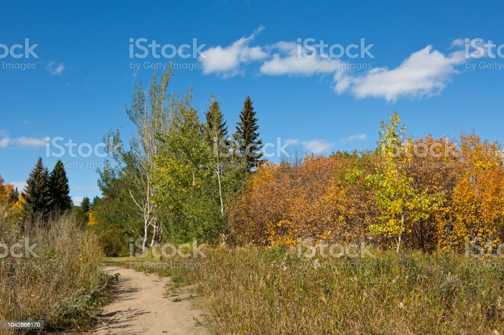 Autumn trees blue sky trail stock photo