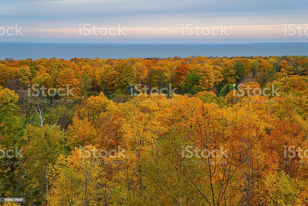 Autumn Trees by Bay stock photo