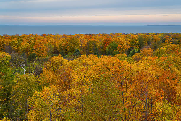 autumn trees by bay - green bay wisconsin stock photos and pictures