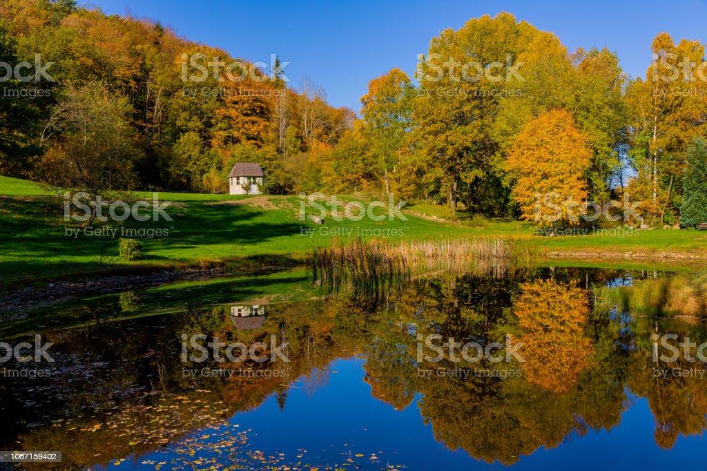 Höstträd vid sjö bildbanksfoto
