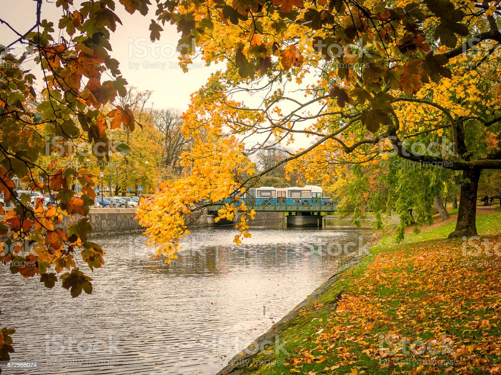 Autumn trees by river stock photo